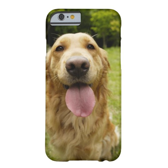Golden Retriever 4 Barely There iPhone 6 Case