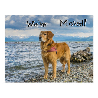 Golden retriever at the beach We've Moved Postcard