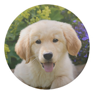 Golden Retriever Baby Dog Puppy Funny Pet Photo ; Eraser