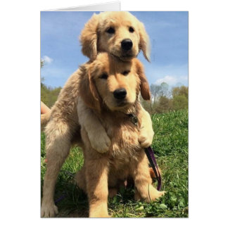 Golden Retriever Brothers Card