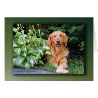 "Golden Retriever Card - ""Beautiful Bailey"""