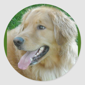 Golden Retriever Close-up Classic Round Sticker