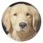 Golden Retriever Closeup Plate
