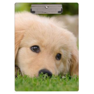 Golden Retriever Cute Puppy Dreaming Dog Portrait Clipboard