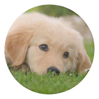 Golden Retriever Cute Puppy Dreams Dog Head Photo Eraser