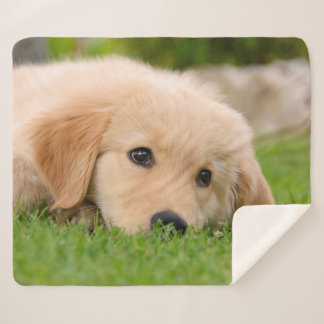 Golden Retriever Cute Puppy Dreams Dog Head Photo Sherpa Blanket