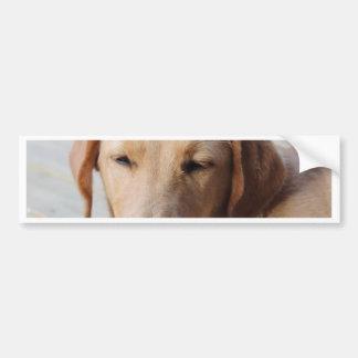 Golden Retriever Dog #2 Bumper Stickers