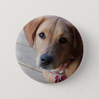 Golden Retriever Dog 2 Inch Round Button