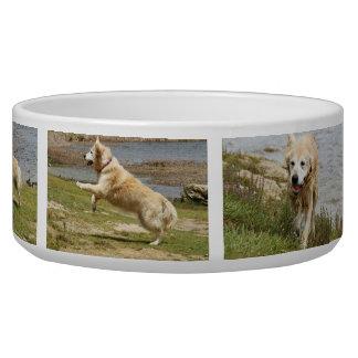 Golden retriever dog bowl.