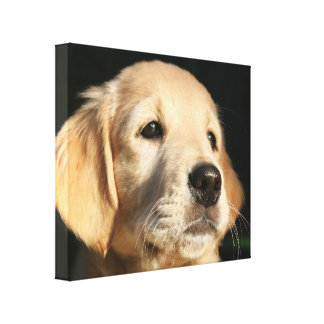 Golden retriever dog canvas print