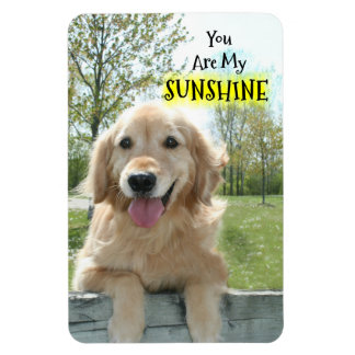 Golden Retriever Dog on Fence You Are My Sunshine Magnet