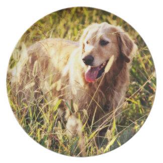 Golden Retriever Dog Plate