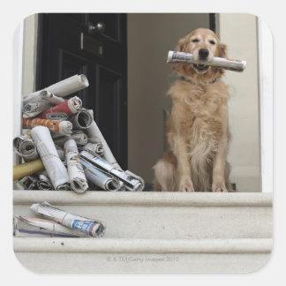 Golden retriever dog sitting at front door square sticker