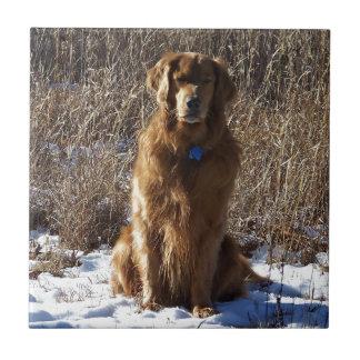 Golden Retriever Dog Tiles
