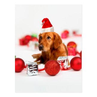 Golden Retriever Dog W Red Santa Hat Christmas Postcard