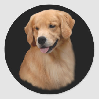 Golden Retriever Frisco Small Sticker