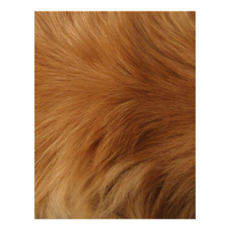 Golden Retriever Fur Letterhead
