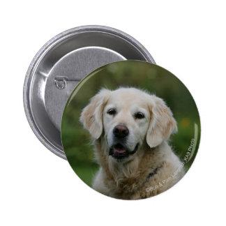 Golden Retriever Headshot 2 2 Inch Round Button