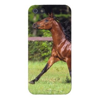 Golden Retriever Headshot 3 iPhone 5  - Customized iPhone 5 Case
