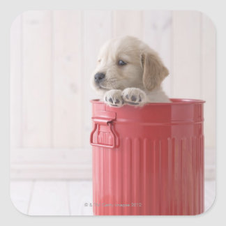 Golden Retriever in Bucket Square Sticker