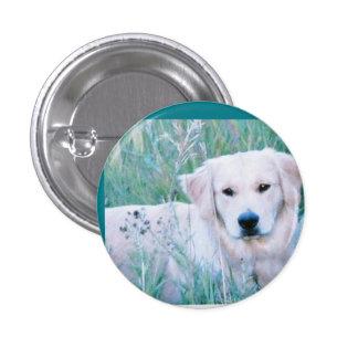 Golden Retriever in Grass 1 Inch Round Button