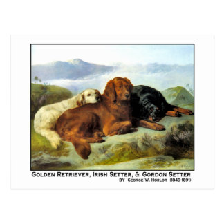 Golden Retriever, Irish Setter & Gordon Setter Postcard
