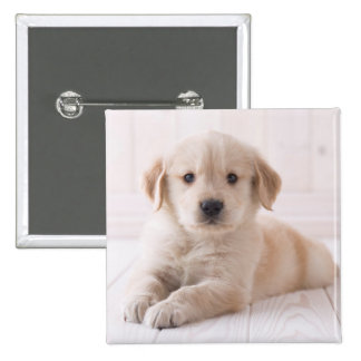 Golden Retriever Lying Down 2 Inch Square Button