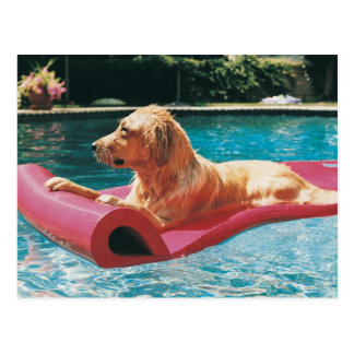 Golden Retriever Lying on an Air Bed in a Postcard