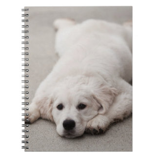 Golden Retriever Note Pad Notebooks