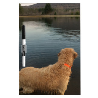 Golden Retriever on a Rock at the Lake Dry Erase Boards