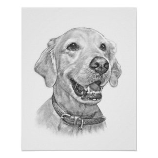 Golden Retriever Pet Portrait Drawing Poster