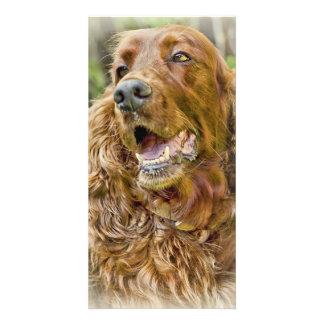 Golden Retriever portrait Photo Card Template