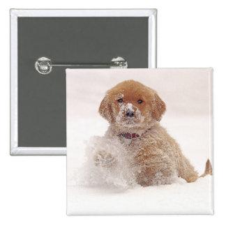 Golden Retriever Pup in Snow 2 Inch Square Button