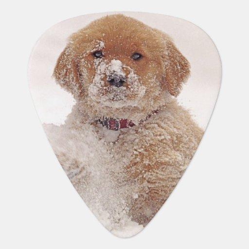 Golden Retriever Pup in Snow Pick