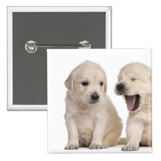 Golden Retriever puppies (4 weeks old) 2 Inch Square Button