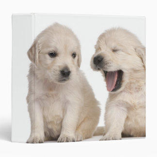 Golden Retriever puppies (4 weeks old) Vinyl Binder