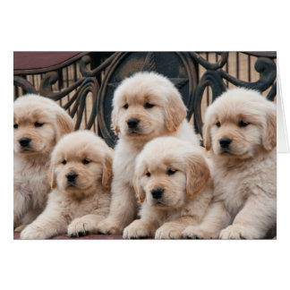 Golden Retriever Puppies Card