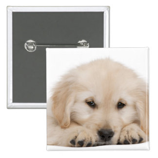 Golden retriever puppy (20 weeks old) 2 inch square button