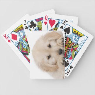 Golden retriever puppy (20 weeks old) poker deck