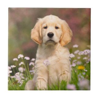 Golden Retriever puppy a cute Goldie Tile