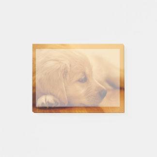 Golden Retriever Puppy Antoine Melancholy I Post-it Notes