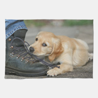 Golden retriever puppy chews at the tying lacing kitchen towel