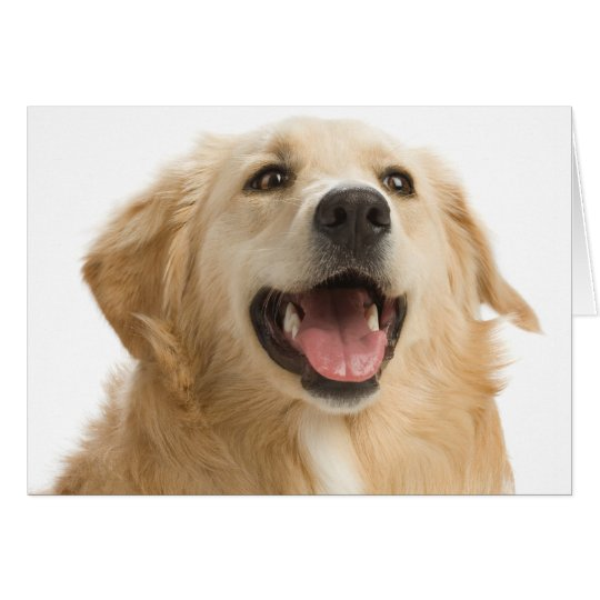 Golden Retriever Puppy Dog Blank Greeting Notecard
