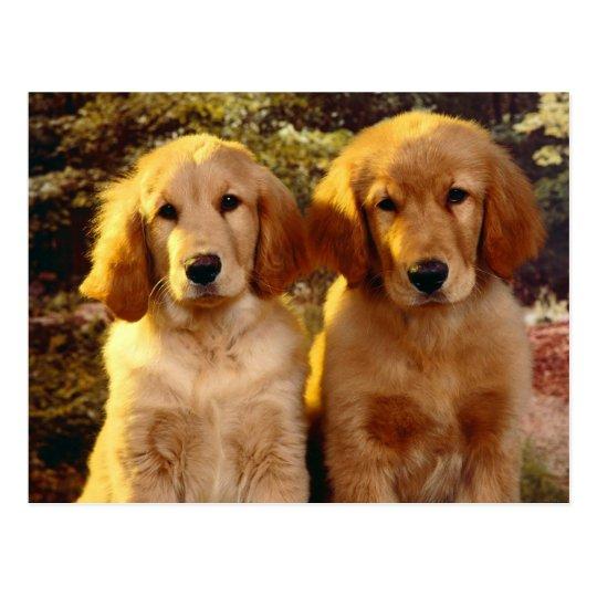 Golden Retriever Puppy Dog Blank Postcard