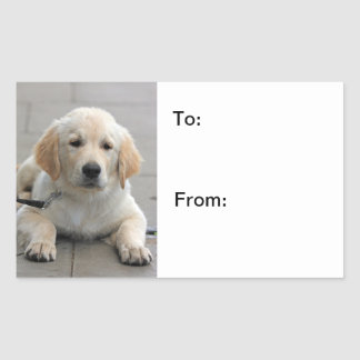 Golden Retriever puppy dog cute photo stickers