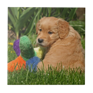 Golden retriever puppy in the grass with toy tile