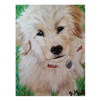 Golden Retriever Puppy Postcard
