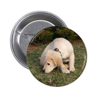 Golden Retriever Puppy Sniffing Button