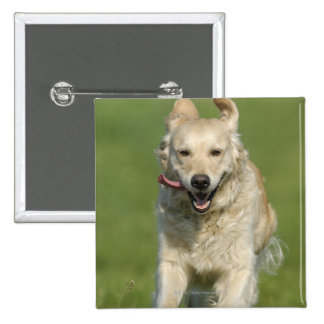 Golden retriever running through meadow 2 inch square button