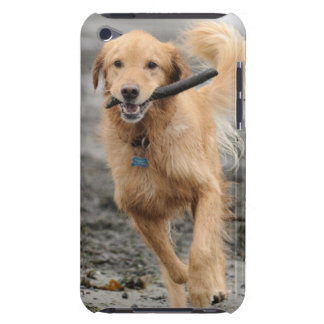 Golden Retriever Running With  Stick In Mouth Barely There iPod Cover